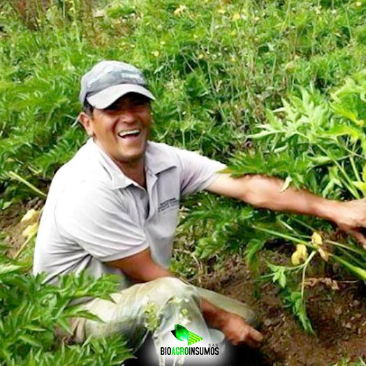Equipo-de-Trabajo-Bioagroinsumos-Jefe-de-planta-Alirio-Morales.jpg