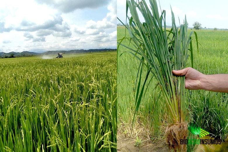 galeria-productos-avisana-y-bioxinis-arroz.jpg